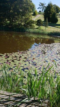Lilydale, Australia: Picturesque views