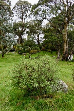Crackenback, Austrália: photo9.jpg