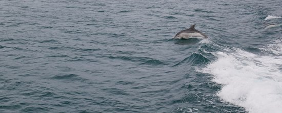 Triabunna, Australia: If you're lucky, the dolphins will come out to play.