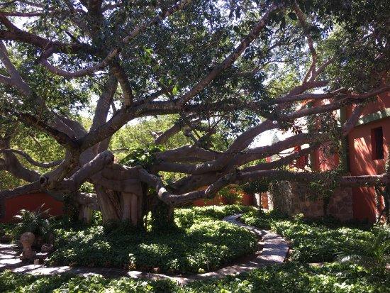 Hacienda De Los Santos: photo1.jpg