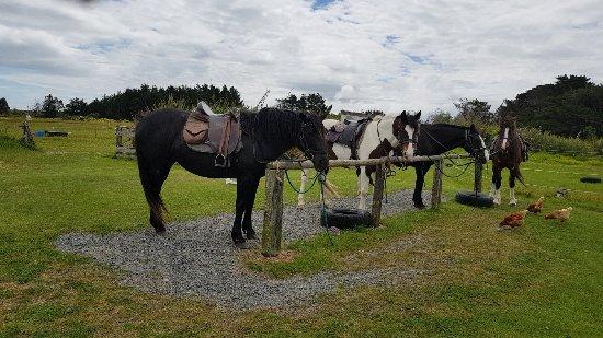 Invercargill, New Zealand: 20171120_143855_large.jpg