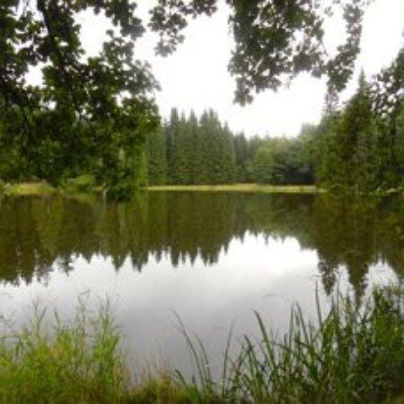 Marianske Lazne, República Checa: Это Кладское озеро, вокруг которого проложена Научная тропа