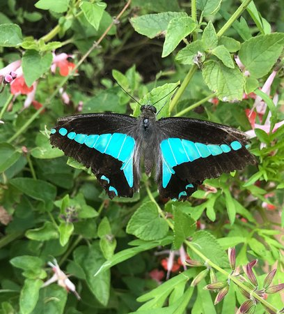 Bribie Island Butterfly House: photo3.jpg