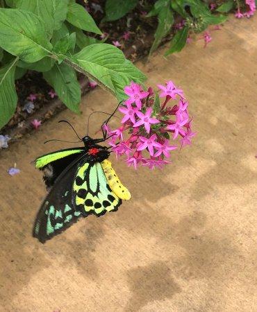 Bribie Island Butterfly House: photo4.jpg
