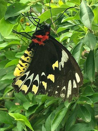 Bribie Island Butterfly House: photo5.jpg