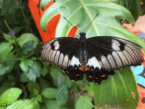 Bribie Island Butterfly House: photo6.jpg