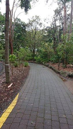 Currumbin, Australia: DSC_1375_large.jpg
