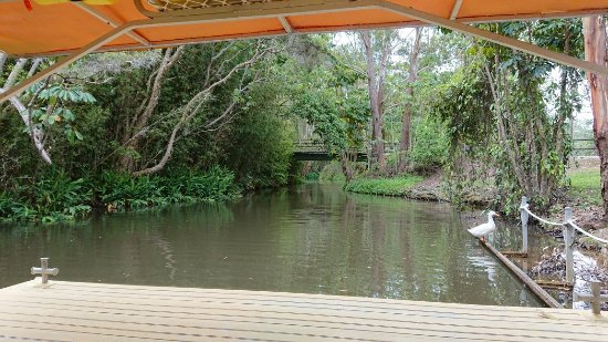 Duranbah, Australia: DSC_1359_large.jpg