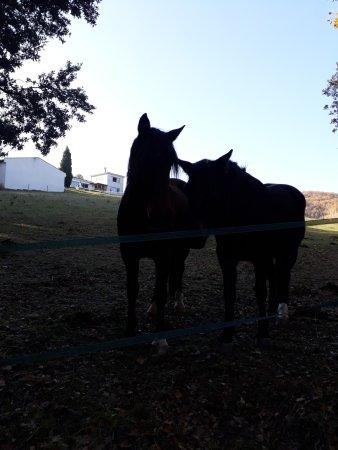 Pieusse, Fransa: cavalli al pascolo