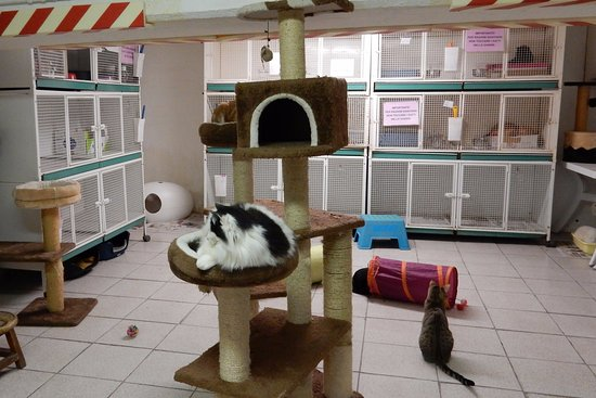 Torre Argentina Cat Sanctuary Rome All You Need To