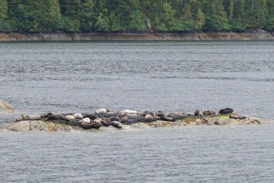 Misty Fjords National Monument: focas e leões marinhos descansando em uma ilhota