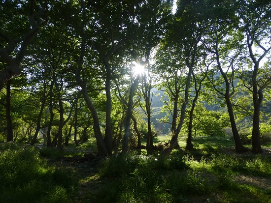 Onar: The Forest with the Giant Trees
