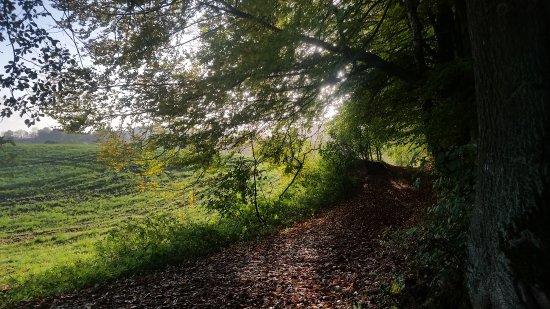 Ваальс, Нидерланды: La foresta vicino al monumento