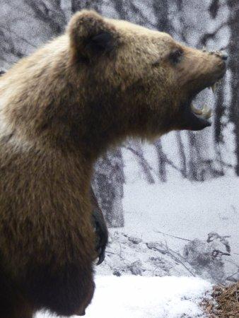 Kuopio, Finlandia: bear