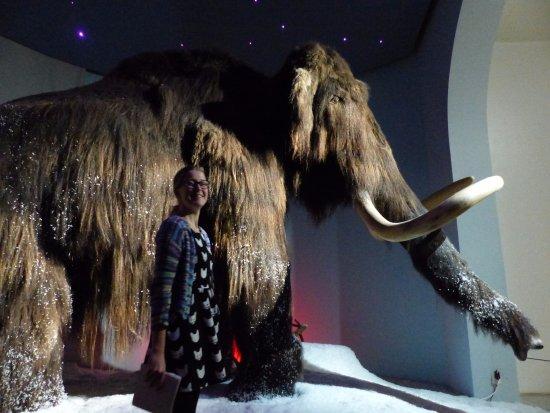 Kuopio Museum: the big mammoth