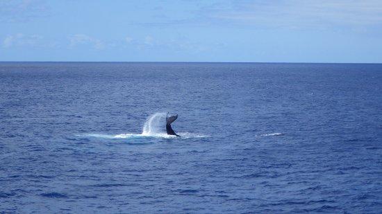 Star of Honolulu - Dinner and Whale Watch Cruises: スターオブホノルル号 (アメリカ合衆国 ハワイ州)