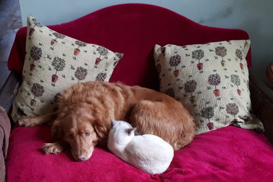 Minchinhampton, UK: Betsy and Marianne (2 out of 3 resident pets)