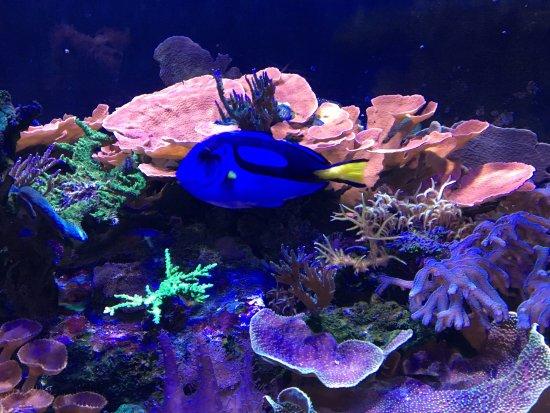 Mote Marine Laboratory and Aquarium: photo0.jpg