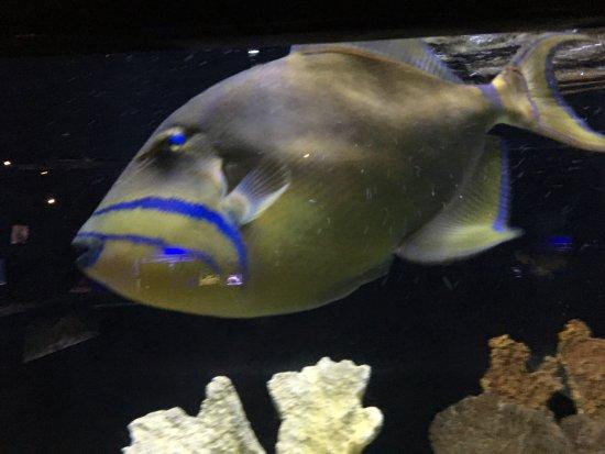 Mote Marine Laboratory and Aquarium: photo1.jpg