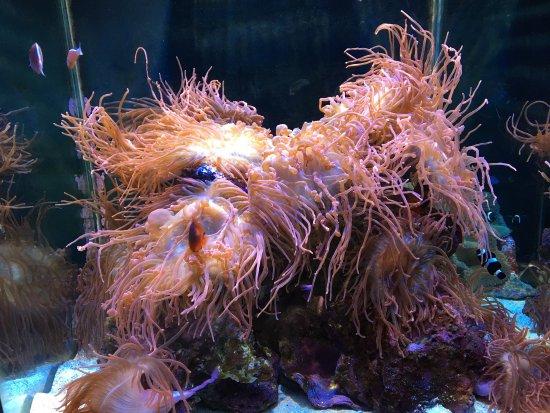 Mote Marine Laboratory and Aquarium: photo8.jpg