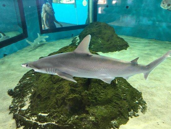 Mote Marine Laboratory and Aquarium: photo9.jpg