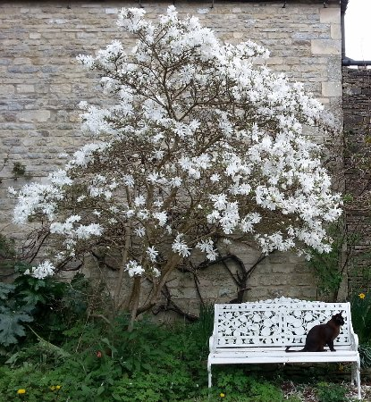 Minchinhampton, UK: Magnolia (with Ptolemy sitting on bench)