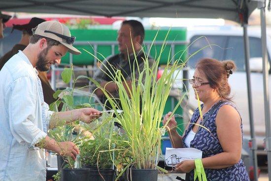 Corpus Christi Downtown Farmer's Market