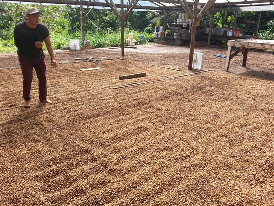 Captain Cook, HI: Getting a tour of the coffee drying process