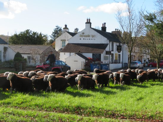 Nether Wasdale, UK: Loved this place! As we sat on a bench outside the hotel, we were passed by a few hundred sheep!