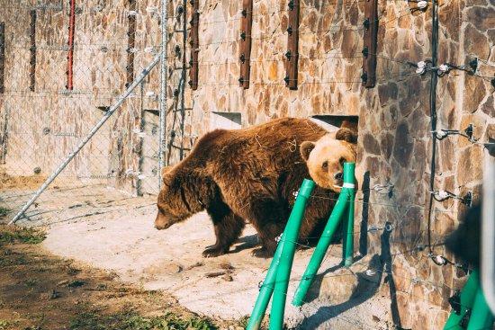 Bear Sanctuary Domazhyr