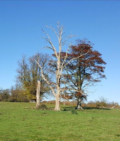 Lenham, UK: Beautiful walk around the lake on a sunny November morning... Stunning