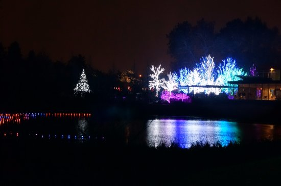 Lisle, IL: Reflections of Lighted Trees at Meadow Lake