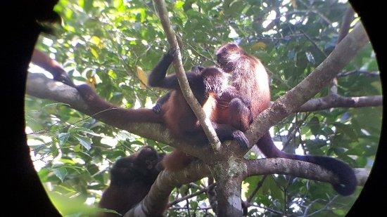 Drake Bay, Costa Rica: 20171119_092400_large.jpg