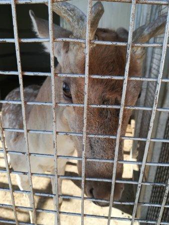 Al Salt, Jordan: Animal zoo , for kids
