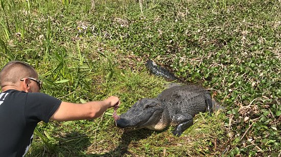 Marrero, LA: Capt'n Derek feeding a hungry gator!