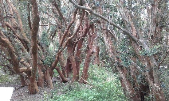 Province of Rio Negro, Argentina: Bosque de Arrayanes