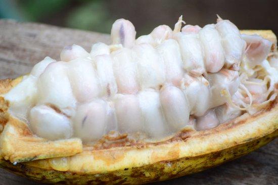 "Mayong, إندونيسيا: More secrets of ""the jungle"""