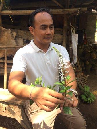Mayong, إندونيسيا: Putu explaining medicinal plants