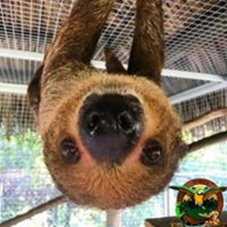 Saint Cloud, Floryda: Lilly the Sloth hanging out