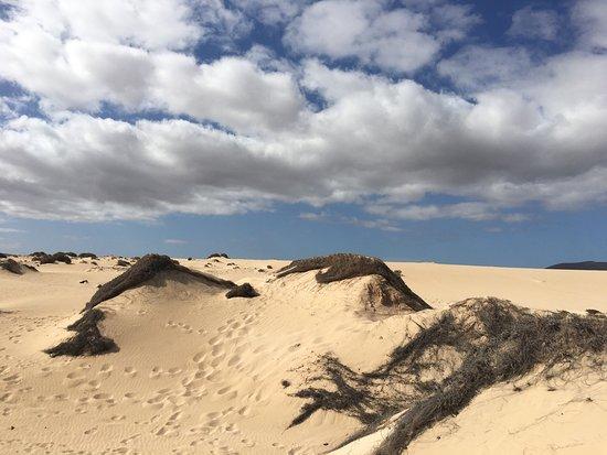 Corralejo Dunes: photo1.jpg