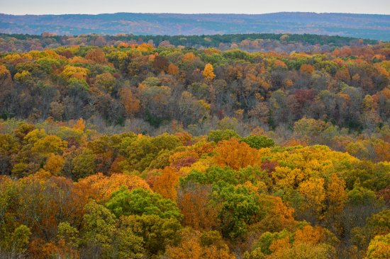 Harrisburg, IL: Fall color, Garden of the Gods