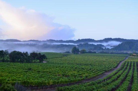 Healdsburg, CA: Estate Vineyard