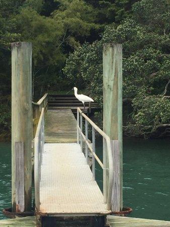 Matakana, Nuova Zelanda: photo2.jpg