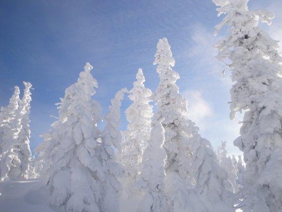 Parc national des Monts-Valin: Ce sont les FANTÔMES et je dis WAWWWW!
