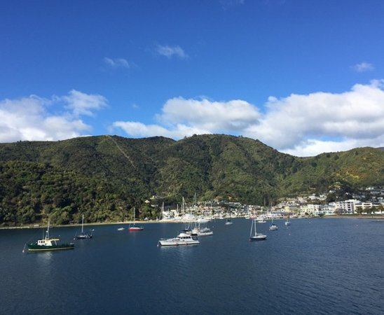 Picton, Yeni Zelanda: Combine a morning scenic Marlborough tour with a half day wine tour