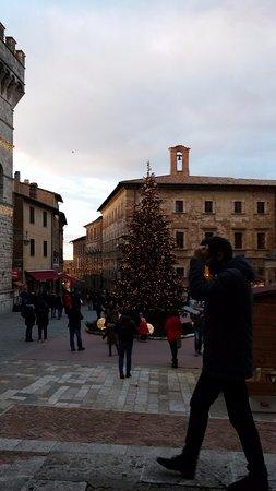 Montepulciano, Włochy: L'albero