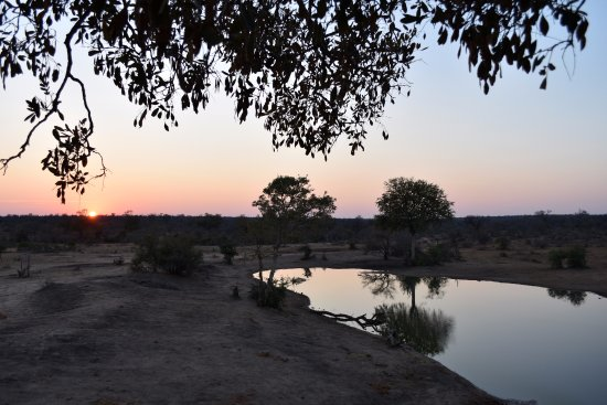 Timbavati Private Nature Reserve, Sudáfrica: The view from the treehouse