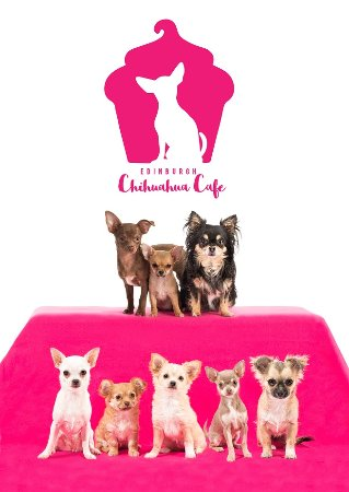 Edinburgh Chihuahua Cafe