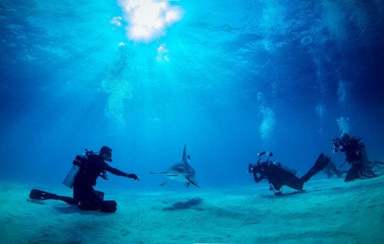 Bimini: Hammerhead shark encounter was epic. We saw 2 huge Hammers on a perfectly clear day Pablo and sh
