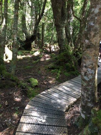 Cradle Mountain-Lake St. Clair National Park, Αυστραλία: photo1.jpg